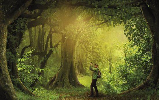 The Hidden Life of Trees st 1 jpg sd high Copyright Constantin Film Verleih Gmb Hx 60c2001e85bda